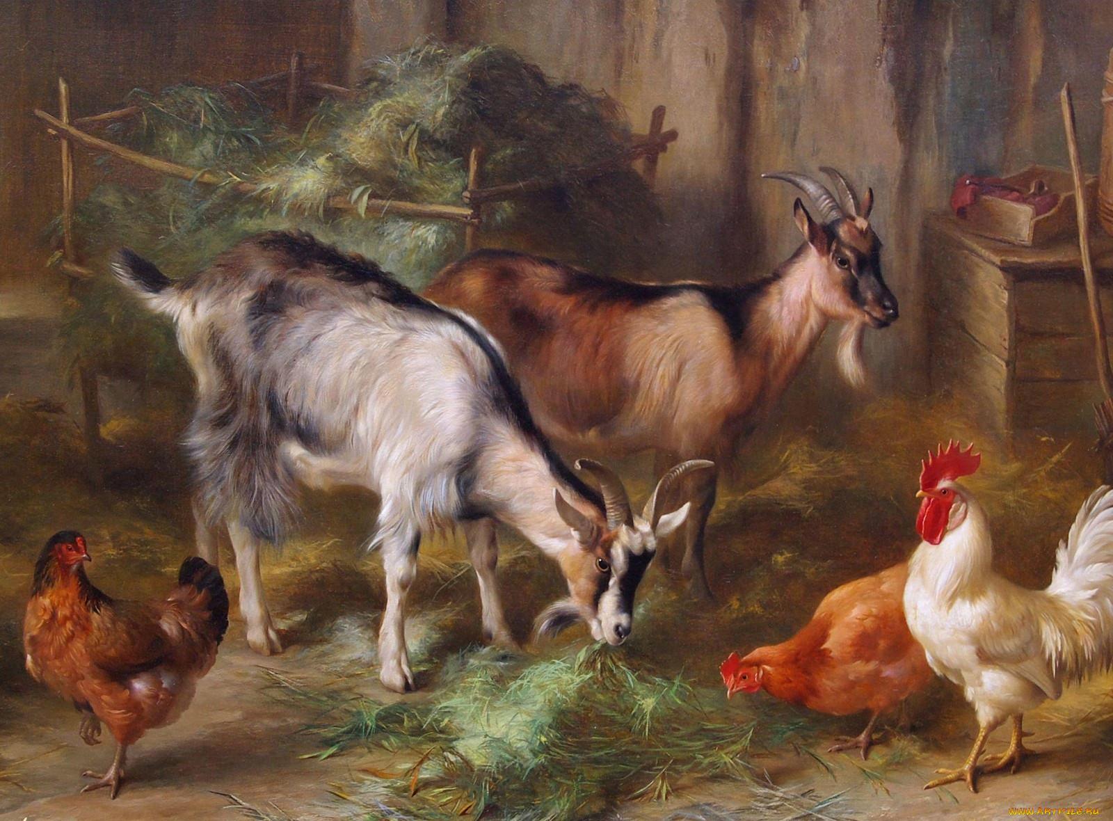 картинка скотный двор домашние животные транспортировке организации похорон